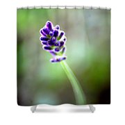 Lavender Moments Shower Curtain