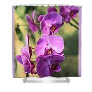 Lavender Orchids Shower Curtain