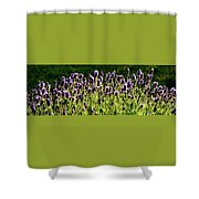 Lavender Pano Shower Curtain
