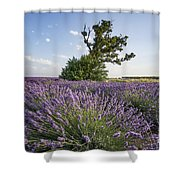 Lavender Provence  Shower Curtain by Juergen Held