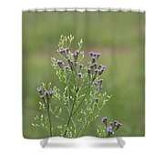 Lavender Purple Verbena Wildflowers  Shower Curtain