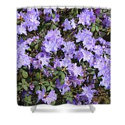 Lavender Rhododendrons Shower Curtain