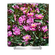 Lavender Roses Shower Curtain