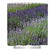 Lavender Sea Shower Curtain