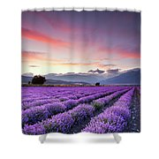 Lavender Season Shower Curtain by Evgeni Dinev