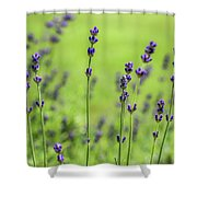 Lavender Spikes  Shower Curtain