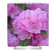 Lavender Spring Shower Curtain by Jimi Bush