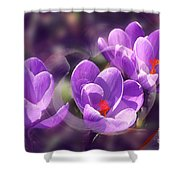 Lavender Spring Shower Curtain