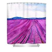 Lavender Shower Curtain