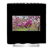 Lavender Tulip Tree Blossums   Spring     Indiana Shower Curtain