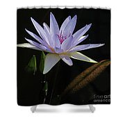 Lavender Tropical Water Lily Shower Curtain