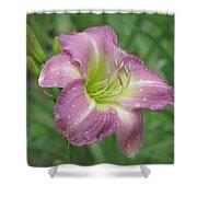 Lavender Vista - Daylily Shower Curtain