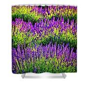 Lavenderous Harmony Shower Curtain