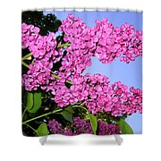 Lavish Lilacs Shower Curtain