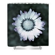 Lawn Daisy - Toned Shower Curtain