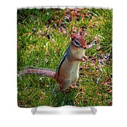Lawn King Shower Curtain