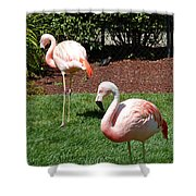 Lawn Ornaments Shower Curtain