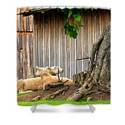 Lawnmowers At Rest Shower Curtain