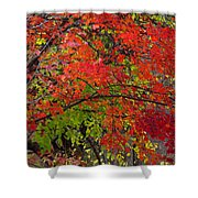 Layers Shower Curtain by Ed Smith