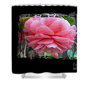 Layers Of Pink Camellia Dream Shower Curtain