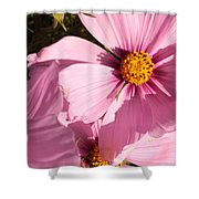 Layers Of Pink Cosmos Shower Curtain