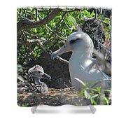 Laysan Albatross Chick Shower Curtain