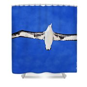 Laysan Albatross Shower Curtain