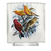 Laysan Honeycreeper Shower Curtain
