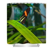 Lazy Butterfly Shower Curtain