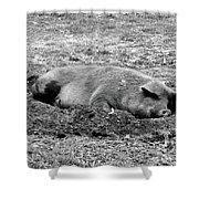 Lazy Hog Shower Curtain