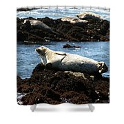 Lazy Seal Shower Curtain