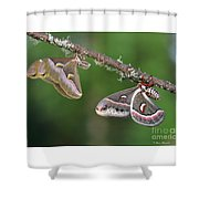 Le Duo Improbable. Shower Curtain