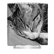 Lea Sleepy Cat Shower Curtain
