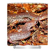 Leadback Salamander Pair Shower Curtain