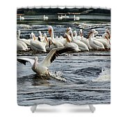 Leading Pelican Shower Curtain