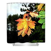 Leading The Way Into Fall Shower Curtain