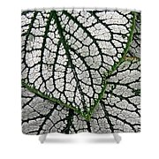 Leaf Abstract 19 Shower Curtain