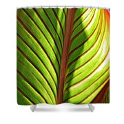 Leaf Abstract  23 Shower Curtain