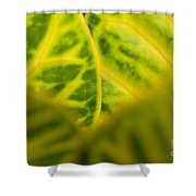 Leaf Abstract Shower Curtain