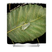 Leaf And Water Shower Curtain