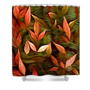 Leaf Collage Photo Shower Curtain