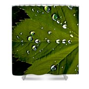 Leaf Covered In Raindrops Shower Curtain