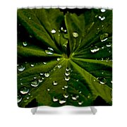 Leaf Covered With Water Droplets Shower Curtain