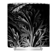 Leaf Detail 2 Black And White Shower Curtain