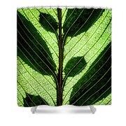 Leaf Detail Shower Curtain