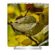 Leaf Dew Shower Curtain