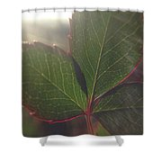 Leaf Flare Shower Curtain