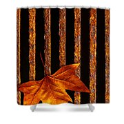 Leaf In Drain Shower Curtain by Carlos Caetano
