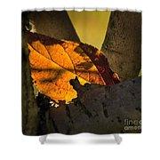 Leaf In Fork Shower Curtain