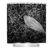 Leaf In Phlox Nature Photograph Shower Curtain